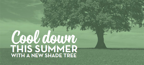 Cool down this summer with a new shade tree.